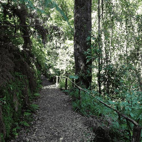 Monumento Natural Contulmo